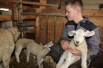 ungdom med lamm