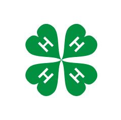 Grønn kløver