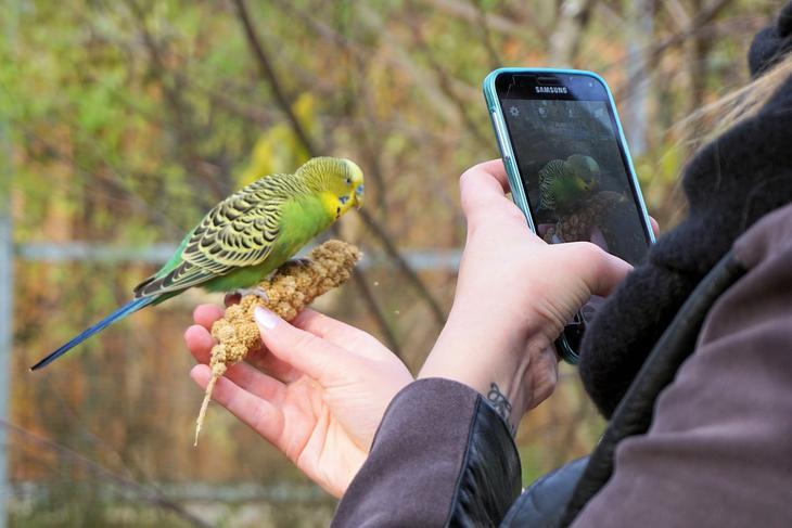 mobilkamera tar bilde av fugl, foto: Andreas Lischka fra Pixabay
