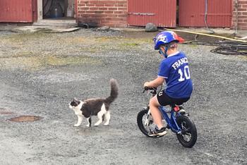 Gutt på sykkel med katt, foto: Helga Oline Tveit Wang