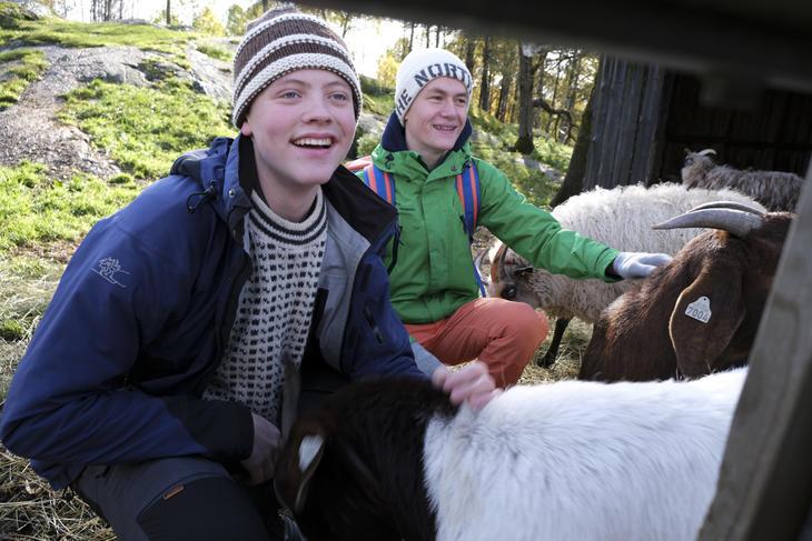 To gutter koser med dyr. Natur i bakgrunnen. Foto: Beate Patay