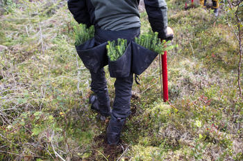 Person med planteveske, foto: Ragnhild Kjeldsen (NDLA)
