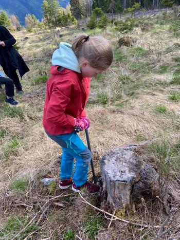 Skogplanting i Åsgardane 4H
