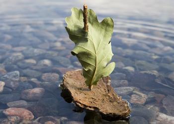 En barkebåt på vannet, foto: gemenacom