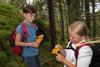 Barn plukker kantareller i skogen, foto: Camilla Nesheim