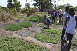 Små grønnsaksåkre i Gambia