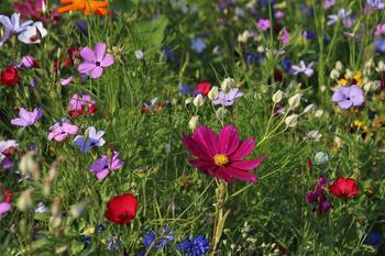 Blomster, foto: pasja1000 fra Pixabay