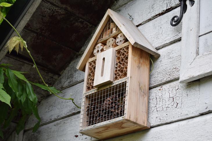 Insektshotell på en vegg, foto: Jenny Johansson fra Pixabay