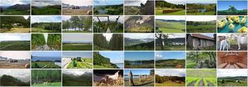 Fotokollasje om landsbruk, foto: Fylkesmannen i Rogaland